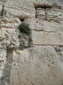 Western wall (21)